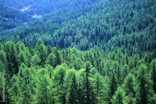 Foto auf Gartenposter Wald bosco foresta di conifere