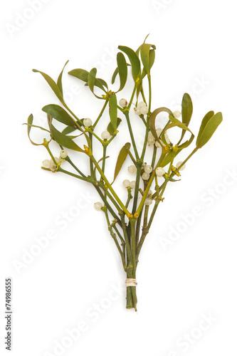 Fotografie, Obraz  Bunch of mistletoe isolated on a white studio background.