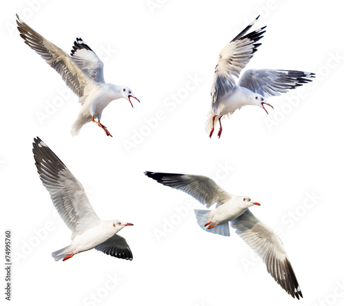 Foto flying action of seagull