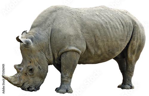 Foto op Plexiglas Neushoorn Rhinoceros cropped