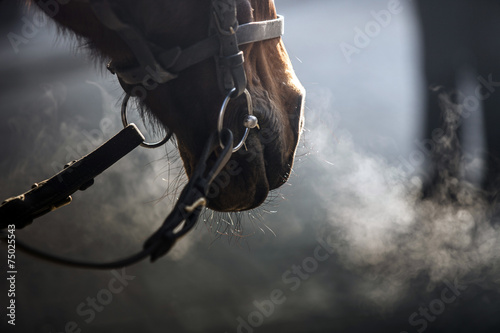Cavallo Canvas Print