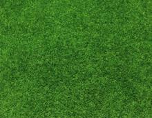 Green Grass Background Vector