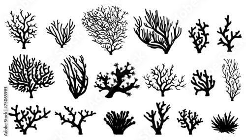 Photo coral silhouettes