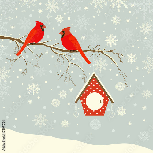 Fotomural Cute red cardinal bird with birdhouse on branch in winter