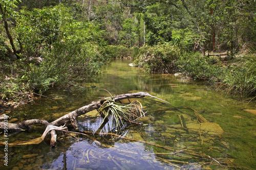 Natural Park El Cubano. Cuba Canvas Print