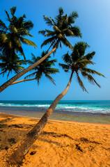Obraz Sri Lanka