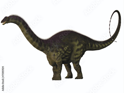 Photo  Apatosaurus on White