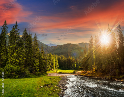 Foto op Aluminium Scandinavië Mountain river in pine forest at sunset