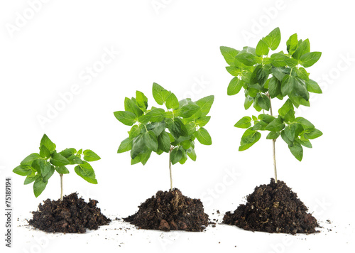 Obraz Saplings on white background - fototapety do salonu