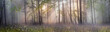 Leinwanddruck Bild - Magic Carpathian forest at dawn