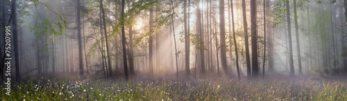 Spoed Fotobehang Bos Magic Carpathian forest at dawn