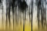 świt w lesie - 75216126