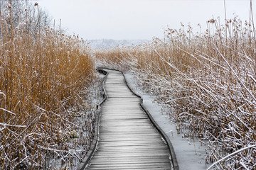 Obraz na PlexiBoardwalk with frozen reeds