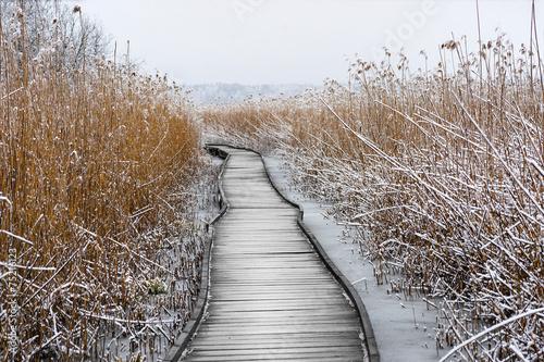 Boardwalk with frozen reeds - 75216123