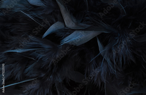 black feather Tableau sur Toile