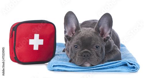 Foto op Plexiglas Franse bulldog Hund mit Erste Hilfe Set
