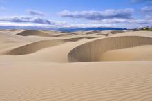 Oceano Dunes Natural Preserve, California (USA)