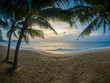 Coconut tree on the beach in Koh Samui