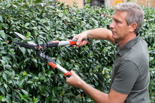 Gardener Cutting Hedge With Pi...