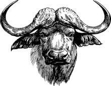 Vintage Graphic Head Of Buffalo