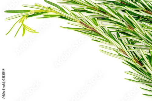Poster Vegetal Background texture of organic rosemary bunch on white with copys