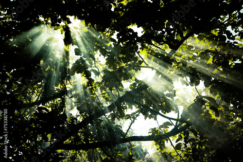 Wall Murals Forest the sun's rays passing through the pear and lighting plot. tinte