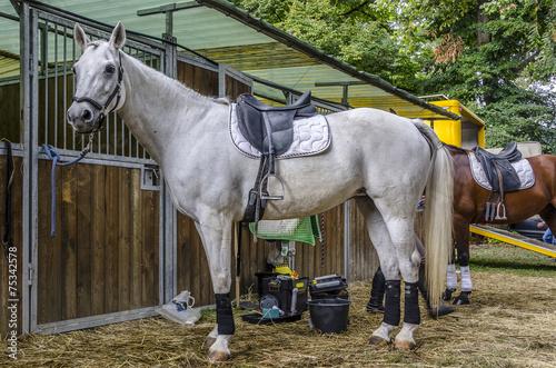 Fotografie, Obraz  Cavallo bianco in scuderia