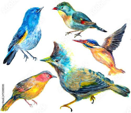rysunkowe-ptaki