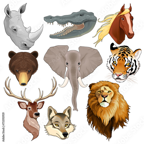 Poster Chambre d enfant Set of animal heads
