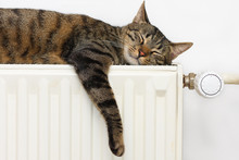 A Tiger (tabby) Cat Relaxing O...