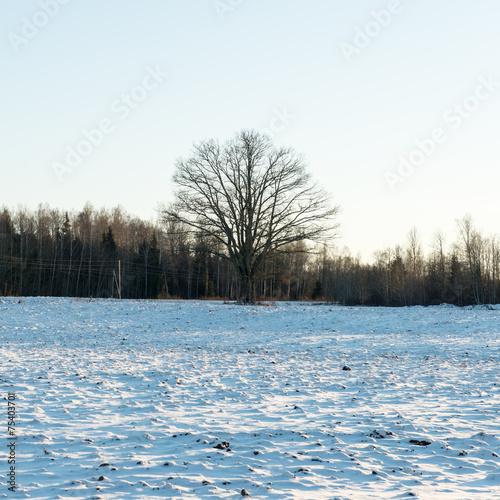 Fototapeten Natur country snowy road in winter