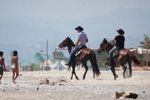 Cavalli, Api, E Gabbiani