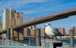 Seagull bird in Brooklyn