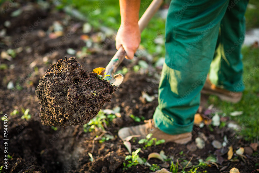 Fototapety, obrazy: Gardening - man digging the garden soil with a spud