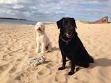 Dwa psy na plaży