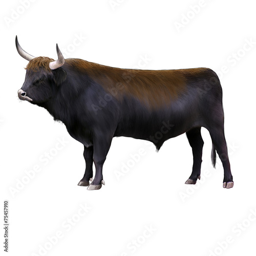 Bos primigenius, Aurochs Canvas Print