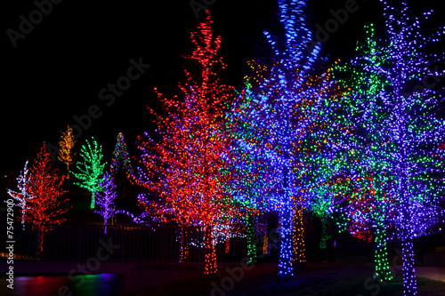 Fotografie, Obraz  Trees tightly wrapped in LED lights for the Christmas holidays.