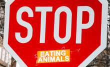 Tiere Essen