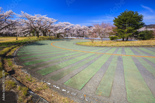 Cuadros en Lienzo Turn road and Cherry tree, Mt. Myogi