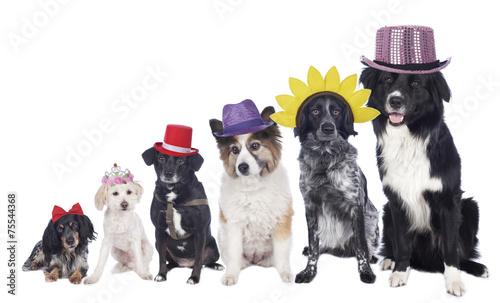 Keuken foto achterwand Kat Hundegruppe mit Faschingshüten
