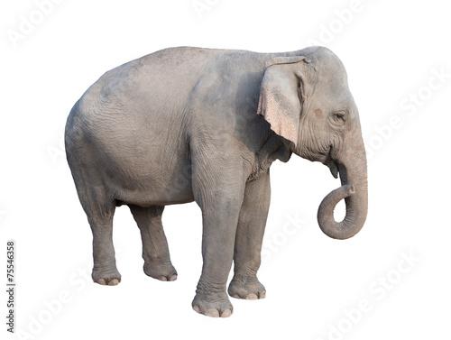 Tuinposter Olifant asia elephant