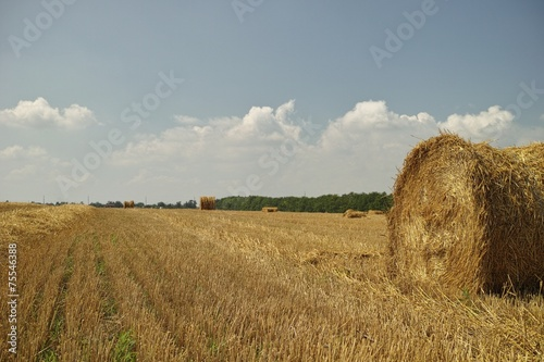 Bale of hay. Poster