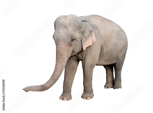 Foto op Aluminium Olifant asia elephant