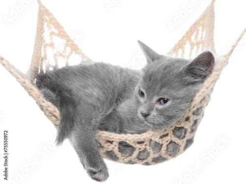 Keuken foto achterwand Kat Cute gray kitten sleeping in hammock