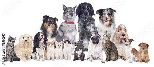 Keuken foto achterwand Kat Hunde und Katzen Gruppe