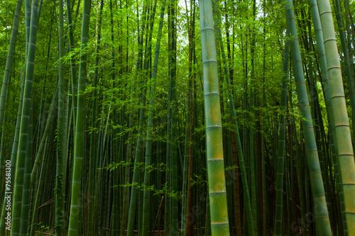 Foto op Plexiglas Bamboe Bamboo forest in Japan