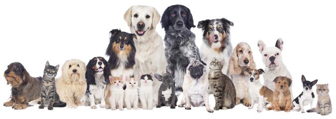 FototapetaGroße Hunde und Katzengruppe