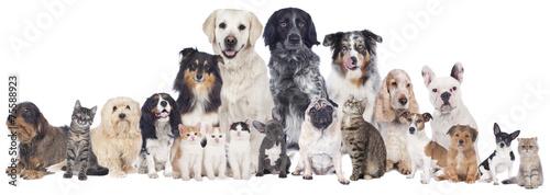 Poster Hond Große Hunde und Katzengruppe