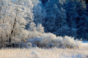 Fototapeta Inspiracje na zimę Leśne Uroki Zimy