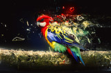 Fototapeta Zwierzęta - Parrot on the branch, abstract animal concept